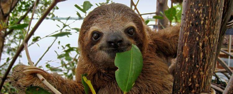 cjm-sloth